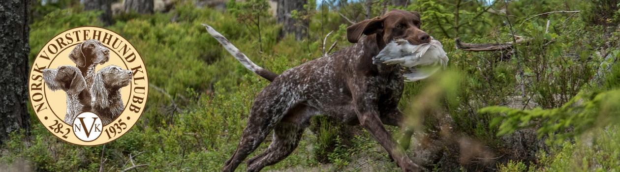 Norsk Vorstehhund klubb