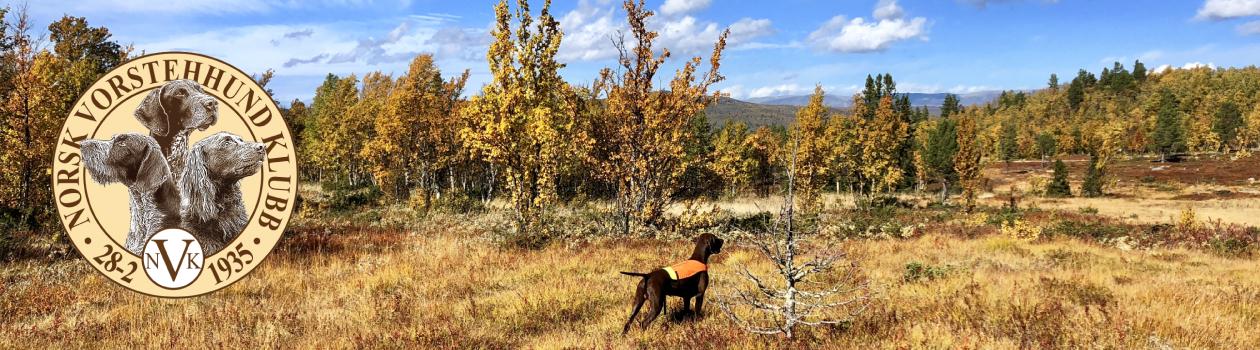 Norsk Vorstehhund klubb – NVC